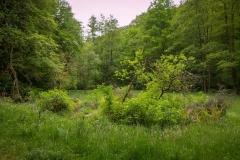 Bergischer Panoramasteig - Etappe 2 | Im malerischen Olpebachtal