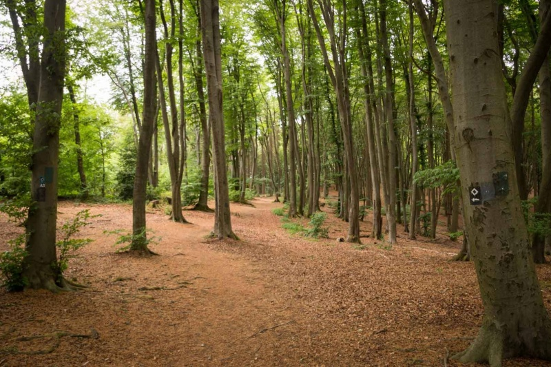 Bergischer Panoramasteig – Etappe 3 | Wald bei Biesfeld